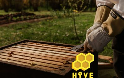 HIVE – Application mobile en gestion